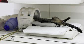 Zeytinburnu Veteriner Kliniği MR Ünitesi